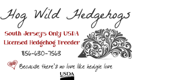 Hog Wild Hedgehogs - Baby Hedgehogs For Sale in South Jersey